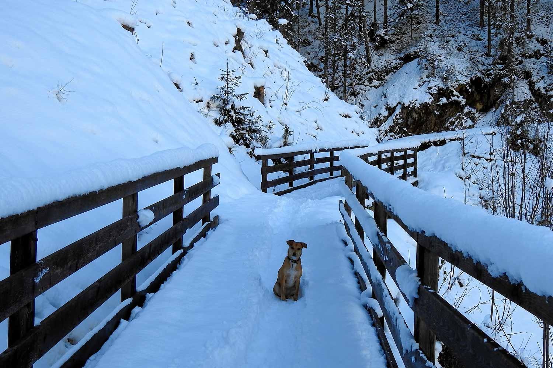 Winterlandschaft auf der Köhlergraben Promenade