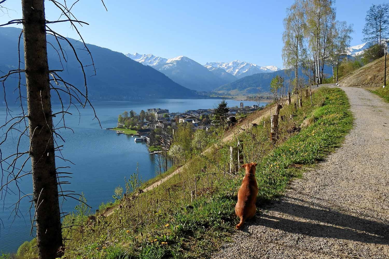 Blick von der Einödsiedlung auf den Zeller See